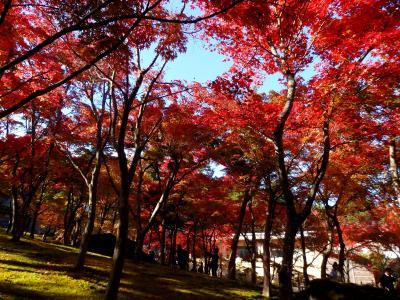 秋色に染まる箱根―紅葉の強羅公園・箱根美術館&ロープウェイで弾丸☆大涌谷
