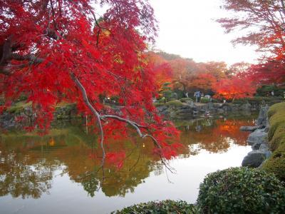 冬桜と紅葉のコラボを見たくて出かけてきましたが、見頃だったのは紅葉だけでした〈1〉[群馬藤岡]