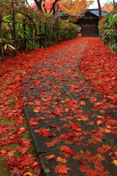 新潟 紅葉めぐり~長岡市 もみじ園、村松公園、加茂山公園、如法寺、久成院