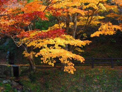 紅葉の丹波路1、観音さまは50年ぶりの特別公開の円通寺、そのあと岩瀧寺(がんりゅうじ)へ