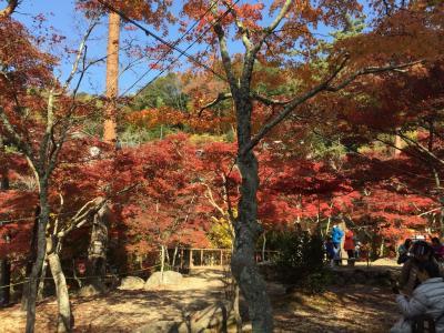 岩屋堂公園 紅葉まつり