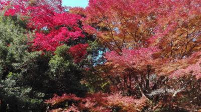 紅葉を見に行ってきました