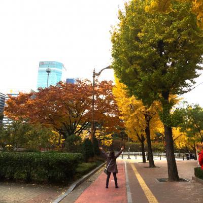 韓国 2016 11月 秋を探しに るんるん女子旅♪