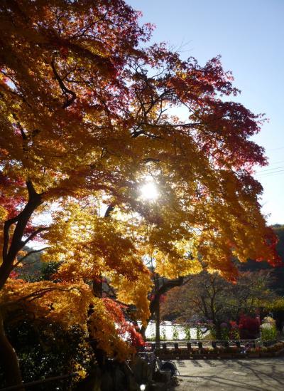 紅葉 in 福島 2 紅葉燃える蛇の鼻と岳温泉