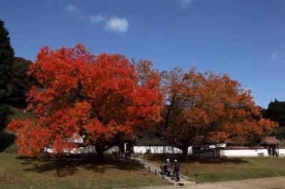 旧閑谷学校の紅葉 2016