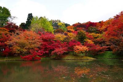 用作公園の紅葉2016