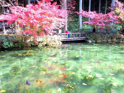 出張ついでの紅葉狩り~アメージングなモネの池