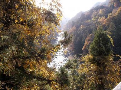 道志川(神奈川県)へ行ってきました・・・