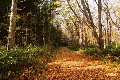 389-晩秋の野幌森林公園、13キロウオーキング