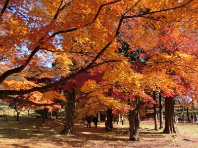 上田城の紅葉と温泉宿でのんびりの旅