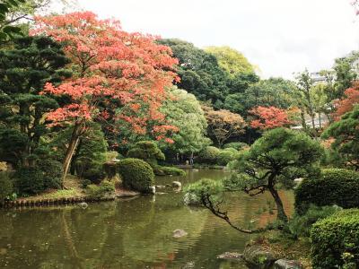 福岡市内の紅葉を見に気ままにぶらり旅