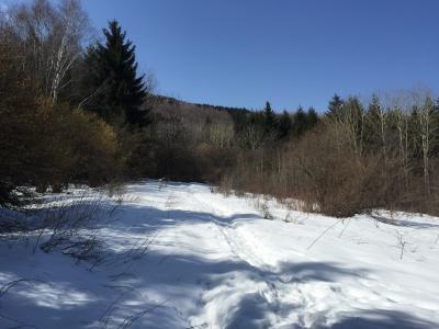 【世界一周】10-1.ん?どっち??ブルガリア ①雪のヴィトシャ国立公園
