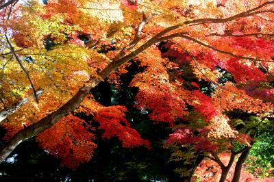 ◆晩秋のみちのく須賀川紅葉めぐり(旭ヶ岡公園編)
