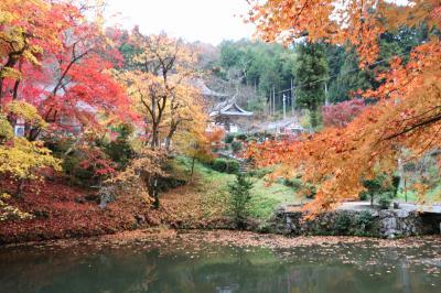 ちょっと遅れた丹波篠山の紅葉 でも落ち葉の紅葉がきれいでした