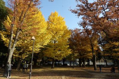 上野公園-2016年初冬