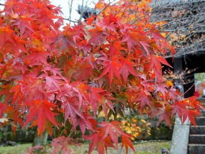 京都2泊3日~紅葉と街歩きと甘いもの~