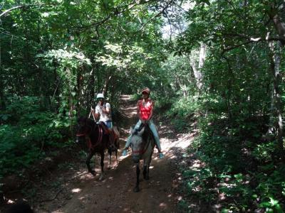 コスタリカで馬と泳ぐ