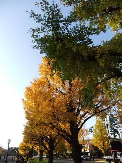 皇居東御苑周辺の紅葉