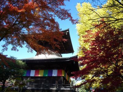 鑁阿寺(ばんなじ)の紅葉_2016_きれいな紅葉を楽しめました。(栃木県・足利市)