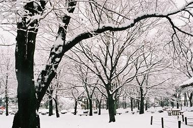 雪の公園  IN  若草公園