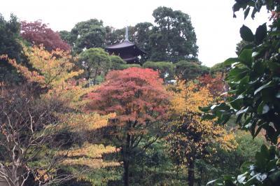 椿山荘と紅葉