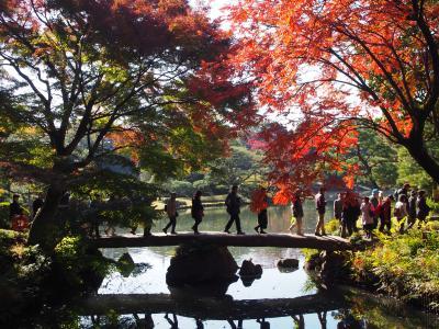 都内紅葉巡り 小石川後楽園、旧古河庭園、六義園 見頃続いてます!