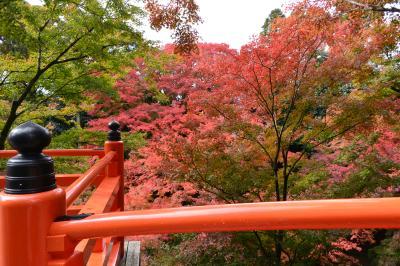 京都の紅葉① 北野天満宮御土居と無鄰菴