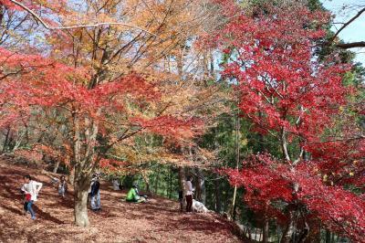 今年最後の西播磨の紅葉