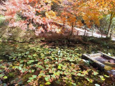 紅葉の大矢田もみじ谷とモネの池