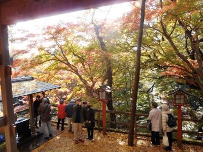 紅葉の等々力渓谷と東急電車撮り鉄の旅--轟く谷の上に不動たる錦秋の舞台があった!