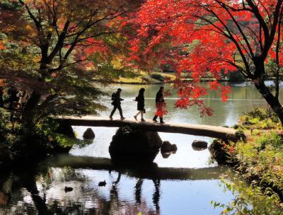 東京都心の紅葉・・江戸の二大庭園で特別名勝の、六義園(りくぎえん)をめぐります。