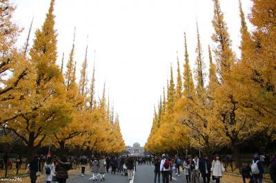 神宮外苑のイチョウ並木の黄葉 と すみだ北斎美術館
