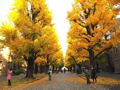 <東京紅葉散歩・3>忠犬ハチ公も尾を振る金色のキャンパス「東京大学・秋物語」