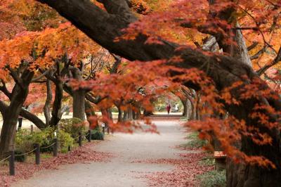 小石川植物園、行く秋を惜しんで・・・