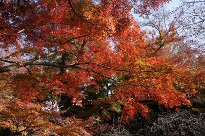 2016.11 紅葉と若冲の京都、KYOTOの若冲【2】~北野天満宮・相国寺他