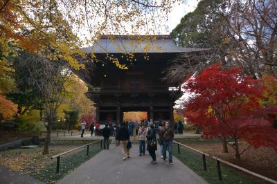 明日は京都 でも今日は東の京都・九品仏
