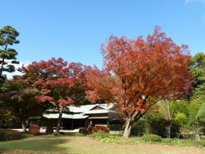 皇居東御苑と二の丸庭園の紅葉_2016_見頃を楽しみました。(東京都・千代田区)