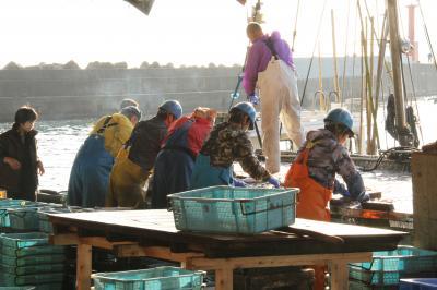 2016年12月 丹後半島 「琴引浜・蒲入漁港の浜売り」
