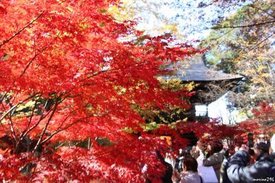 紅葉のフィナーレは九品仏浄真寺~等々力渓谷
