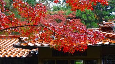佐賀・福岡の紅葉の名所へ(04) 今年最後の公開日・・・九年庵紅葉の名庭。