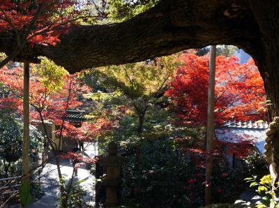2016 都内紅葉巡り (椿山荘・新江戸川公園・豪徳寺)