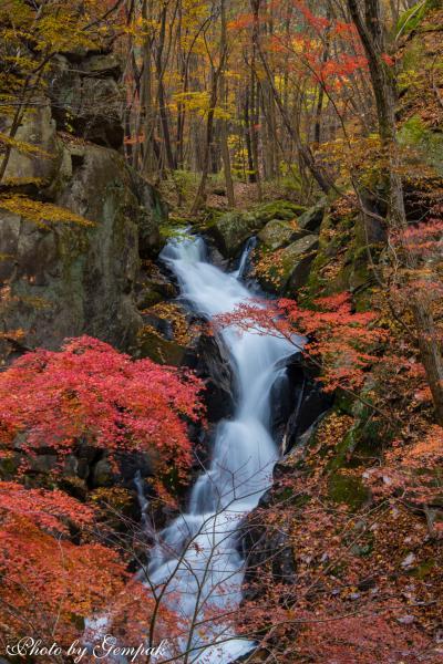 今年最後の紅葉は福島県最南端の秘境、滝川渓谷へ、おまけに大子町のもみじ寺にも立ち寄り