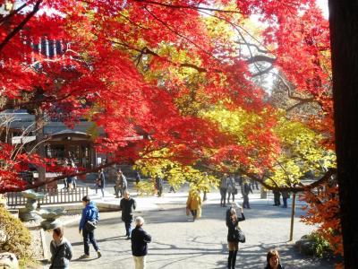 錦秋の武蔵野を歩く-トトロの森からゲゲゲの森へ-2.調布深大寺