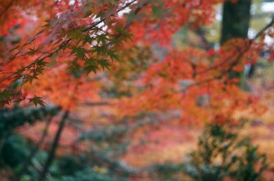 るろうに円蔵 京都散歩編2.途中下車こそが漢の醍醐味。。。仁和寺と北野天満宮