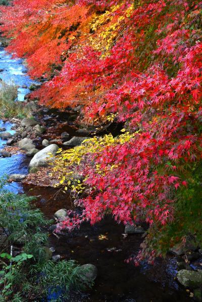 """万葉の時代から文豪に愛された地""""湯河原""""色彩の記憶「紅...錦...翠」"""