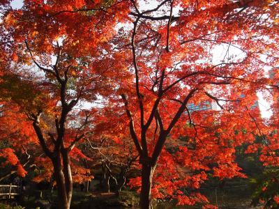 リサーチ不足の東京お出かけ ≪ 日比谷公園の紅葉 ≫
