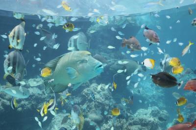 2014年6月 夫婦でサクッと沖縄へ・・・。~美ら海水族館~