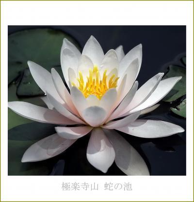 Solitary Journey [1787] 濃い霧の中、水の妖精スイレンの花を鑑賞してきました。<極楽寺山蛇の池&熊野&阿戸の町並み>広島県廿日市市