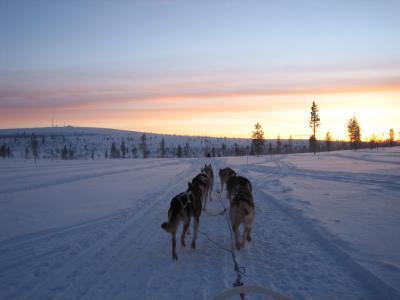 年末年始 フィンランド サーリセルカでオーロラ探し
