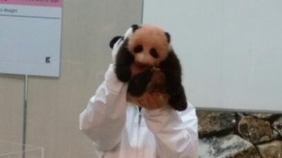 夜バス往復0泊 赤ちゃんパンダに逢いたい!!